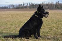 Služební pes Argo vypátral pod kmenem ukrytého muže, našel i svítilnu.
