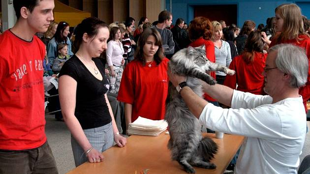 Výstava koček v Ostravě
