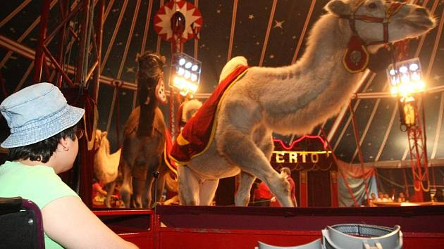 Cirkus Humberto vystupoval zdarma pro více než šest stovek zdravotně postižených dětí a dětí z pěstounských rodin