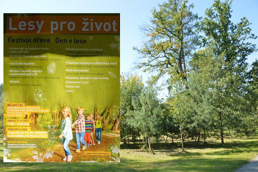 Festival dřeva, Bělský les, Ostrava, 11. září 2021.