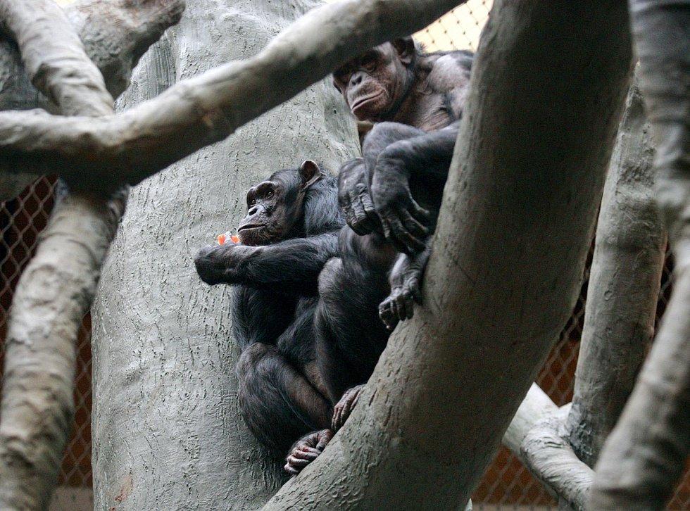 Zoo Ostrava ve čtvrtek 2. dubna otevřela Pavilon evoluce.