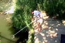 Rybáři loví mrtvé ryby z Petrůvky