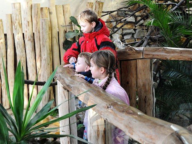 Ondra, Kryštof, Lucie a Julie. Další čtyři děti, kterým v tomto týdnu Deník splnil jejich vánoční přání. Chtěli se podívat do ostravské zoologické zahrady a pozdravit sloní mládě Rashmi.