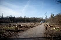 Vykácené stromy v oblasti Poruba-Myslivna, 25. února 2019 v Ostravě.