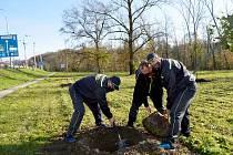 V Moravskoslezském kraji letos Nadace ČEZ podpořila v rámci svého grantového programu Stromy výsadbu celkem 8 alejí.  Moravskoslezském kraji letos Nadace ČEZ podpořila v rámci svého grantového programu Stromy výsadbu celkem 8 alejí.