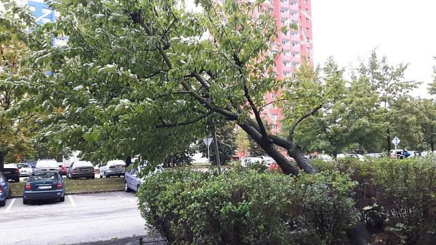 Zásah hasičů na sídlišti Dubina, kde se strom opřel o dopravní značku.