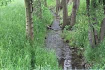 Vřesina je doslova prošpikovaná potoky.