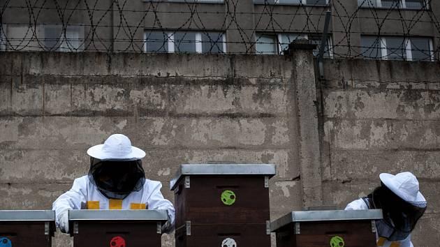 O včely se v současné době pod dohledem odborníka stará dvojice vězňů.