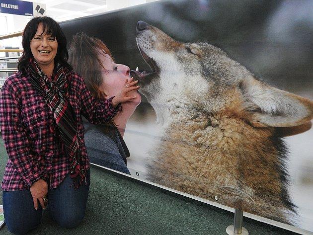Tanja Askani. Dvacet let se rodačka z Ostravy  v Německu stará o vlky.