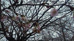 Snímek kvetoucího stromu čtenářky Deníku.