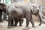 Sloni v Zoo Ostrava. Ilustrační foto.