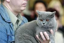 Výstava koček na Černé louce.