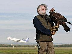 Doprovod při reportáži o dravcích, kteří plaší ptáky na Letišti Leoše Janáčka Ostrava v Mošnově, dělal Deníku Jiří Gallat z Biologické ochrany letiště.