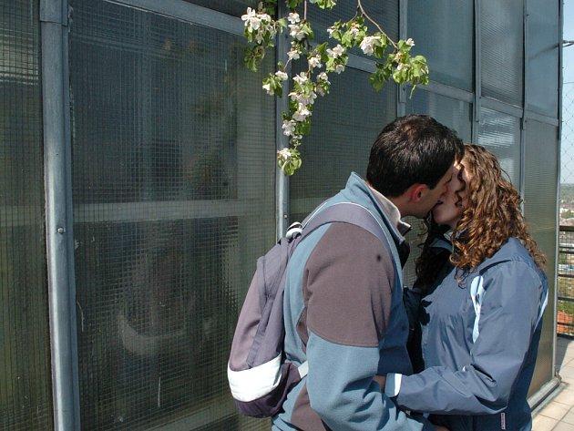 Zamilované páry zlákala na 1. máje vyhlídková věž ostravské Nové radnice.