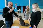Výstava koček na výstavišti Černá louka v Ostravě.
