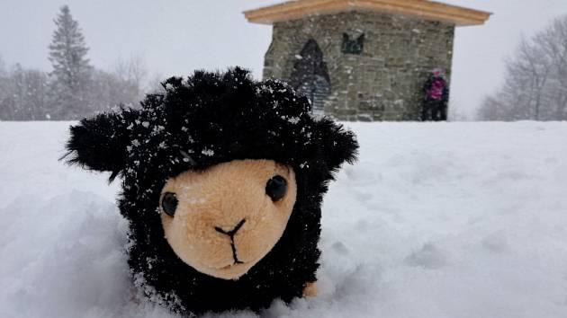 Černá ovce na horách.