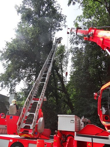 Zákrok hasičů u dubu ve Vřesinské ulici v Ostravě-Porubě.