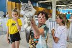 Mezinárodní výstava koček na výstavišti Černá Louka. Ilustrační foto.