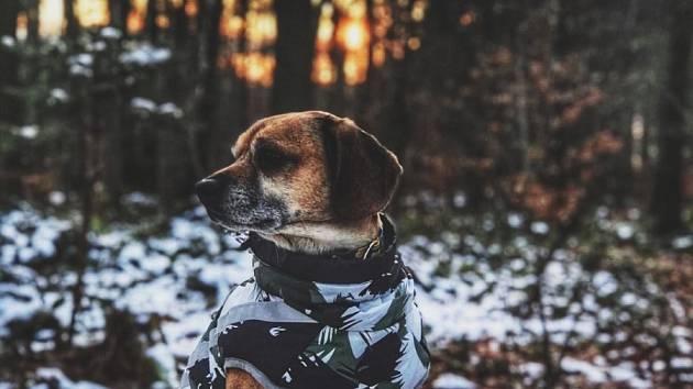 Dominika Letochová zaslala snímek jejího psa Manga v atraktivním outfitu.