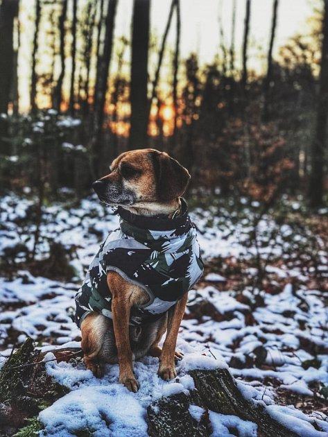 Dominika Letochová zaslala snímek jejího psa Manga vatraktivním outfitu.