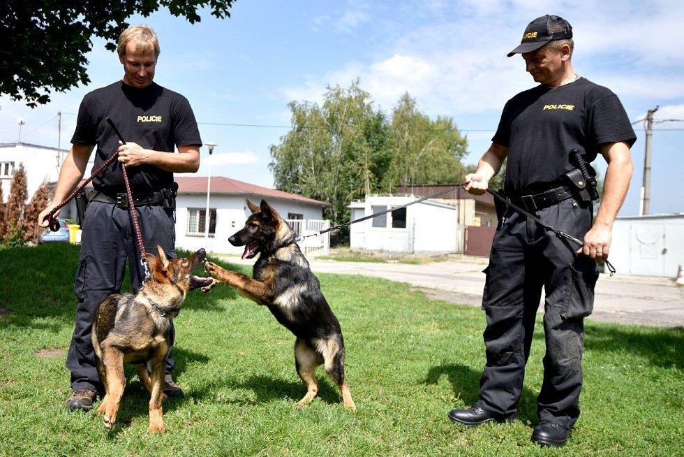 Čtyřměsíční Laiss a o měsíc starší Zik jsou nejmladšími posilami skupiny speciálních kynologických činností Krajského ředitelství policie Moravskoslezského kraje v Ostravě.