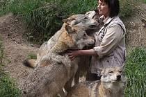 Tanja Askani a její smečka evropských šedých vlků