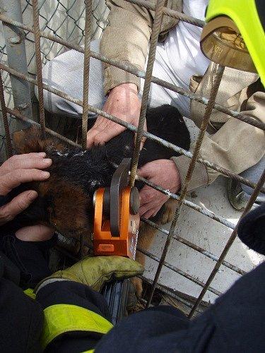 Profesionální hasiči ze Slezské Ostravy zasahovali v sobotu kolem poledne u záchrany štěněte německého ovčáka, které prostrčilo hlavu pevným armovacím pletivem, tvořícím stěny jeho kotce.