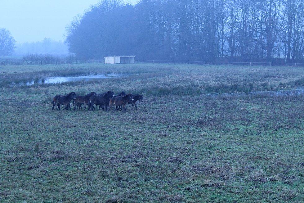 Kozmické mokřady se stádem divokých koní jsou turisticky vyhledávaným místem.
