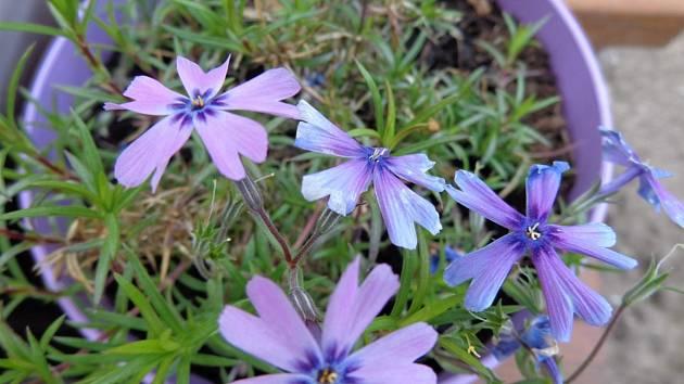 Jarní květinová esence.