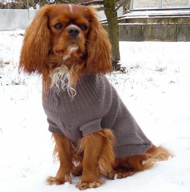 Stylový pes Miry Krále.