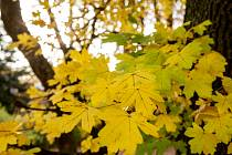 Podzimní listí...
