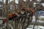 Některá zvířata v ostravské ZOO se tvářila jako by překvapeně, že kromě ošetřovatele vidí také někoho jiného.