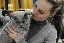 Sobotní mezinárodní výstava ušlechtilých koček přilákalá na výstaviště Černá louka velké množství zájemců o tyto čtyřnohé mazlíčky. Výstava potrvá do neděle.