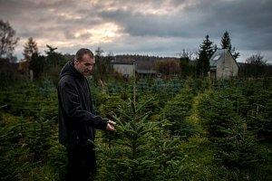 Plantáže s vánočními stromky