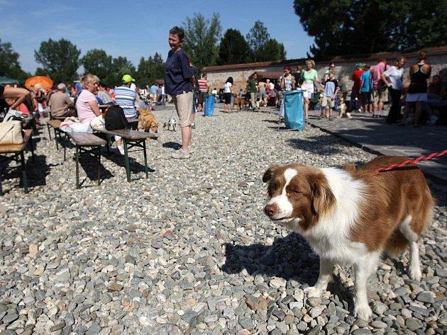 Výstava psů na Slezskoostravském hradě