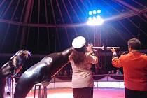 Cirkus Humberto nabízí návštěvníkům vystoupení různých druhů exotických zvířat.