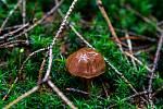 V Beskydech začaly růst houby, 21. srpna 2019.