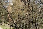 Klimkovice jsou lázeňské město, ležící 7 km jižně od Ostravy. Na snímku v čase bezpečnostních opatření proti koronaviru, duben 2020.
