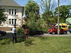Spadlý strom v Bohumíně, 30. dubna 2018