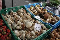Na farmářských trzích u ostravského nákupního centra Futurum byly v sobotu 18. července k mání i hřiby. Kilo za 300.