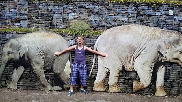 """Matej Špirko, 10 let, Havířov """"Výlet do zoo… za slony"""""""