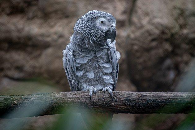 Zvířátka vostravské zoologické zahradě.