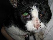Valdemar Kostka nakonec za utýrání kočky dostal trest veřejně prospěšných prací a pokutu.