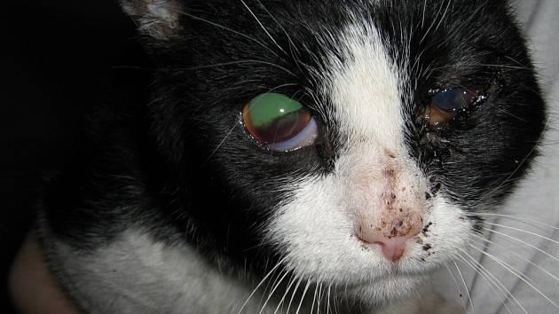 Těžce zraněnou kočku našli náhodní kolemjdoucí v Ostravě-Staré Bělé.