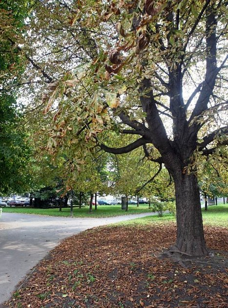 Park čs. letců v centru Ostravy