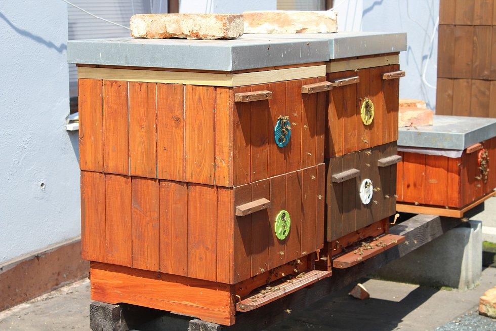 Dříve se neřešila otázka léčení včel, říká opavská včelařka Michaela Štěpáníková