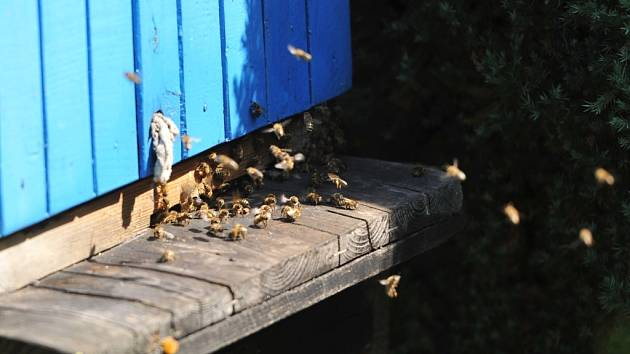 Včelí úl.