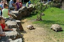 Od pátku má ostravská zoo novou expozici pro želvy ostruhaté.