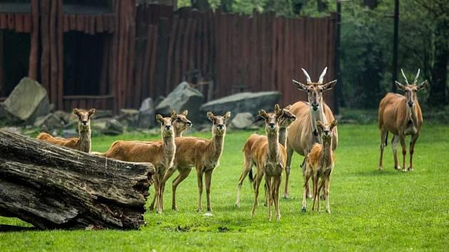 Zoo Ostrava. Ilustrační foto.