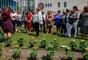 Vysazování slunečnic v lázních Klimkovice.